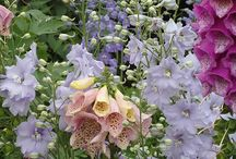 i<3flowers