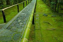 Gorgeous Kyoto