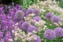 romantisk/mormors trädgård