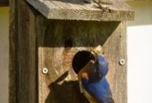 homes for birds and bennificial insects