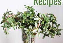 Edible plants & herbs