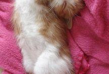 Meow^^