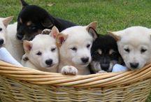 Pets / Wat is een huis zonder lieve, vrolijke en gekke huisdieren om je heen? Hier wat cuties op een rijtje.
