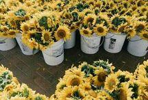 yellow feed // ig