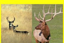 Get it free Miz Denise's Outdoor Cooking: More than 35 recipes for elk and mule deer