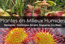 Plantes du Québec / Photos des plantes du Québec présentées sur le site de www.jardinage-quebec.com.
