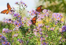 Butterfly Garden / by Gardening