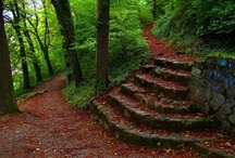 Garden Steps / Steps and stairs in the garden and plants and landscaping surrounding them.