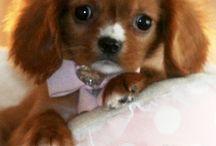 Puppys zo cutie