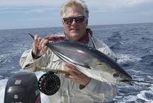 SKIPJACK TUNA (BONITO) / Fly fishing for skipjack tuna/striped tuna/bonito/mushmouth.