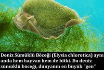 biyolojik