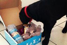 La Wamiz box : des cadeaux pour vos chiens et chats ! / Découvrez toutes les photos de notre Wamiz box, la box spéciale pour animaux de compagnie. Tous les mois découvrez 6 jouets/nourriture de qualité pour votre boule de poils.