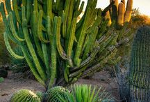 Phoenix, Arizona / Pictures of our beautiful desert.