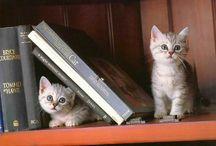 állatok és könyvek