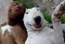 Selfies / Selfie