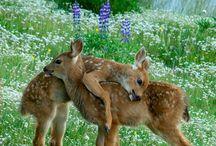 Deer!!! / Deer in the Wild!