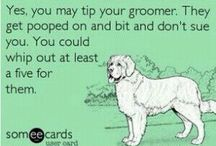 Pet groomer humor / by Deanne Cain