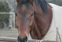 all things equine / by Megan Stanke