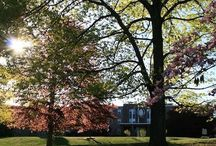 Our Campus / Get an inside look at the beauty of our campus here in West Hartford, Connecticut.