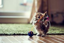big cat 'till lil' kitty