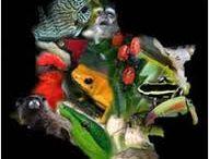 Protecciòn Flora y Fauna.