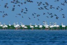 Exquisite Nature Tours in Odisha for Foreign Tourists