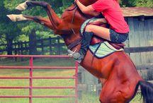 Horse&Rider