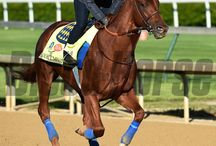 Dortmund / Dortmund  / by Blood-Horse