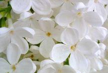 Blomsterelementer / Wallpaper, Mønster, Pattern, Flowers. Ulike Tekstiler eller tapeter i blomstermønster/elementer.