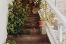 Plants aesthetic
