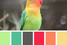 color / Combinations