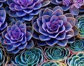 Succulents / by Lucy Lerma Hambleton