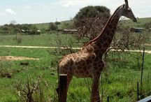 Afryka / Mu winterhollidays 2016 in Afrika - RPA - Johannesburg ^^