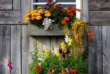 Kasvihuone ja kukkaistutukset