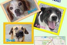 Adozioni / Cani ospiti del canile di Lodi in attesa di adozione definitiva o a distanza