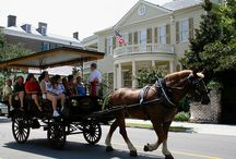 Horse and Carriage Driveing