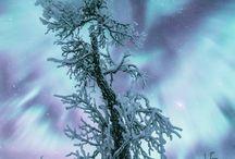 zimná príroda
