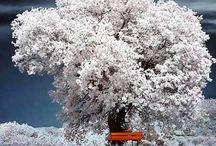 Doğa Ana / Doğanın Güzellikleri