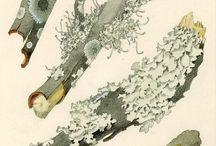 Illustrazioni bosco Munken