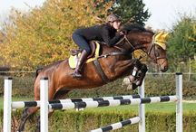 Hevosia Ropeen