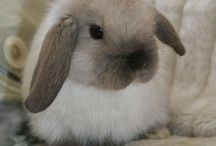 New lop / Ideas for the new lop I'm getting