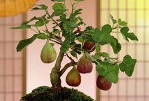 VEGETAL ESPECIAL / Ikebana, bonsai, ramos de boda, centros florales, patios con flores, creaciones artísticas vegetales, ...