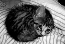 Crazy Cat Lady/Adorable & Et Cetera