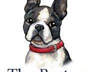 Boston Terrier's world