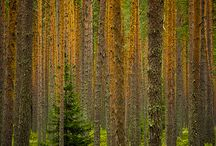 Priroda Natura