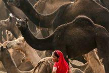 Beautiful Cultures
