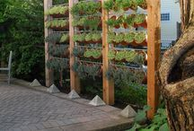 Herb garden / Plant boxes