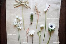 White flowers / by Lynda Read