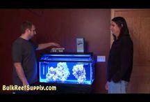 HOME -- aquarium / by Sydney True Smith