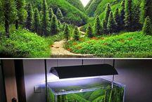 aqua amazing
